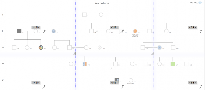 Print a complex pedigree with PedigreeXP - Customize your printing