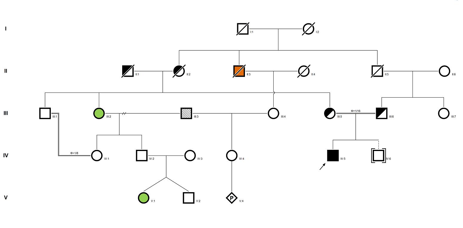 pedigreexp recording and interpretation of pedigree data pedigreexp